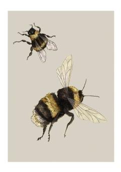 bumble-bee-illustration